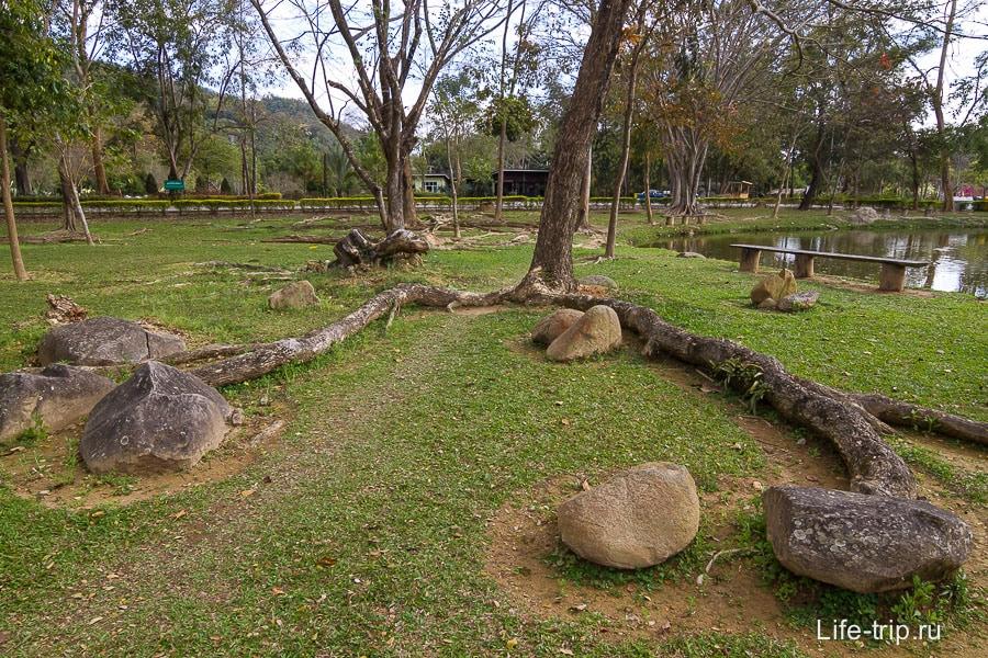 Корни деревьев вылезают наружу