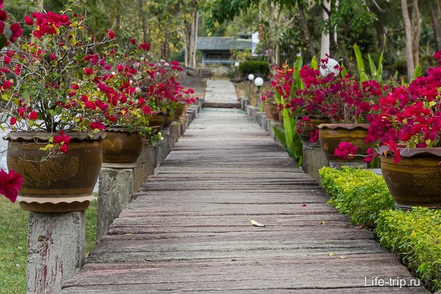 Красивые дорожки в нац парке