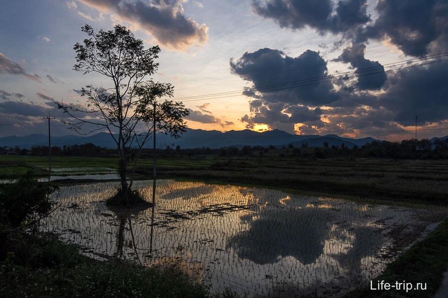Закат на рисовом поле в конце дня