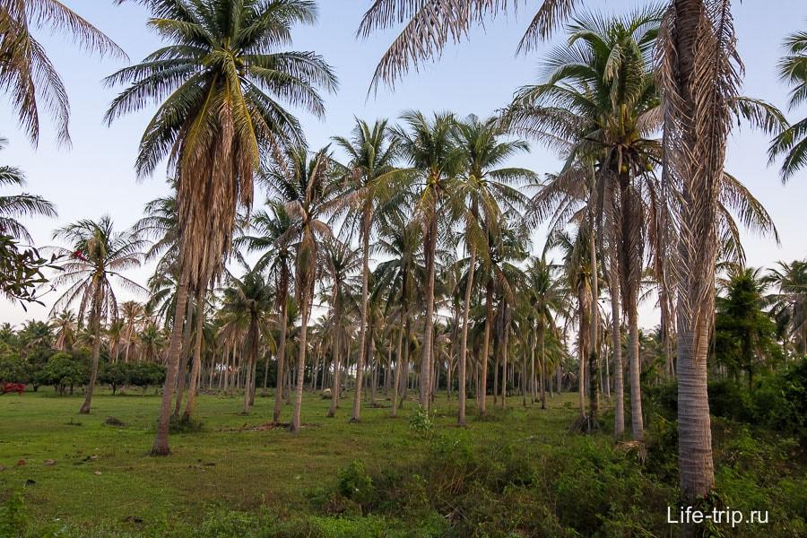 Вокруг пальмовый лес