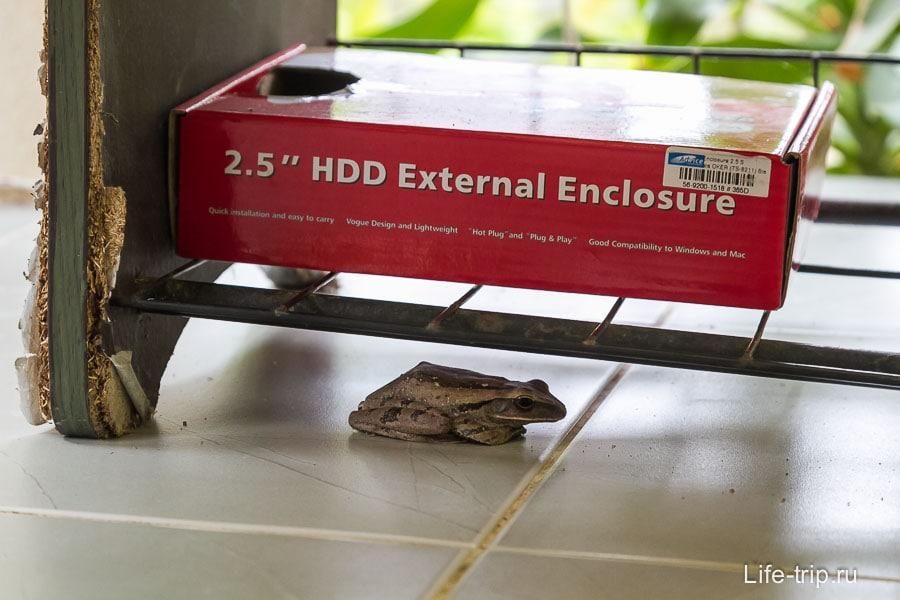 Жаба живет в коробке на обувной полочке