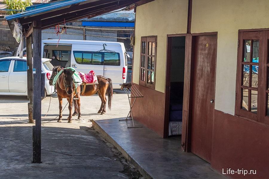 Все как в настоящей деревне - около номера пасутся кони
