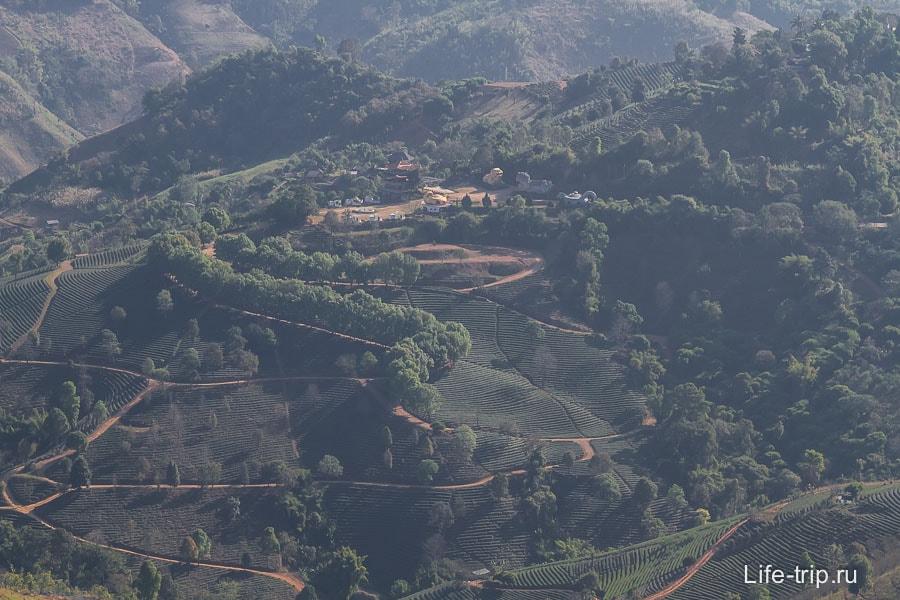 Сплошные чайные плантации