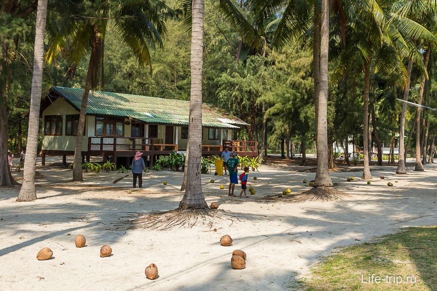 Местные собирают кокосы