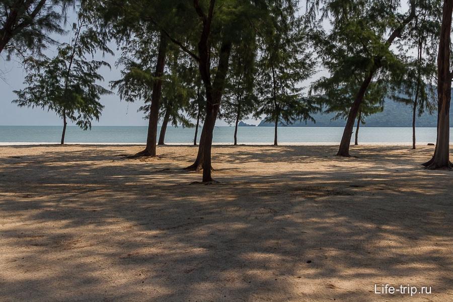 Пляж в объятиях казуринового леса