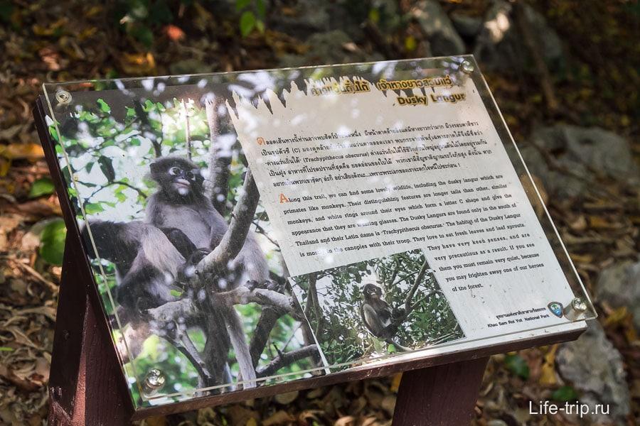 В лесу обещают обезьян, но я их не видел