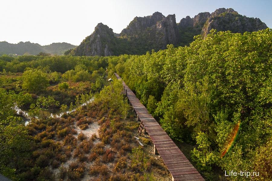 Мостки сквозь мангровые заросли, вид с вышки