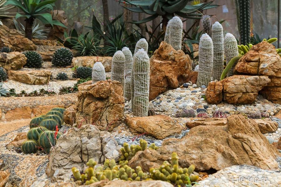 Павильон с кактусами