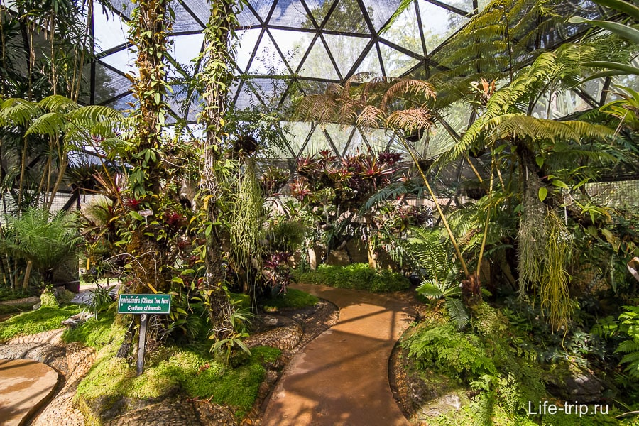 Тропический павильон, все заросло и влажно