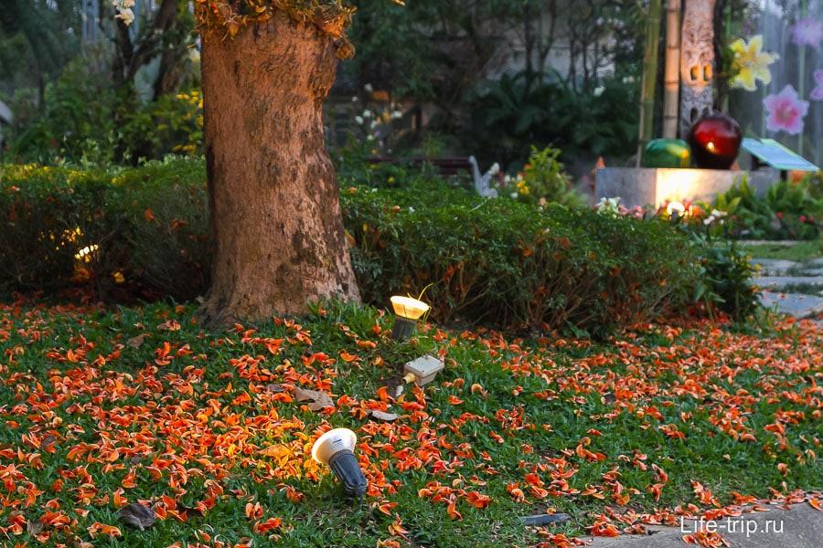 Лепестки опавшие с дерева, красиво
