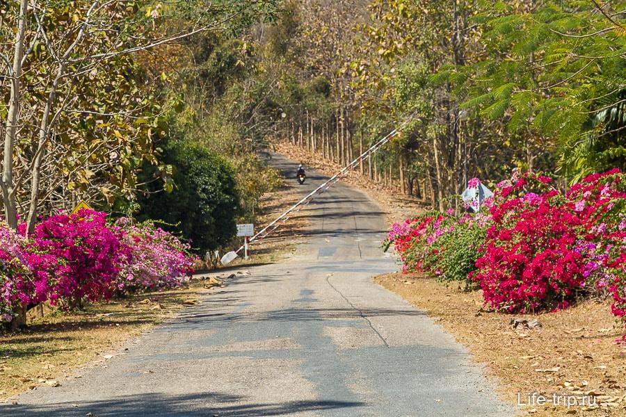 Помимо деревьев еще и цветочки везде