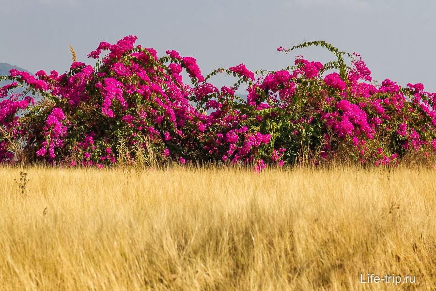 Приятное сочетание цветов