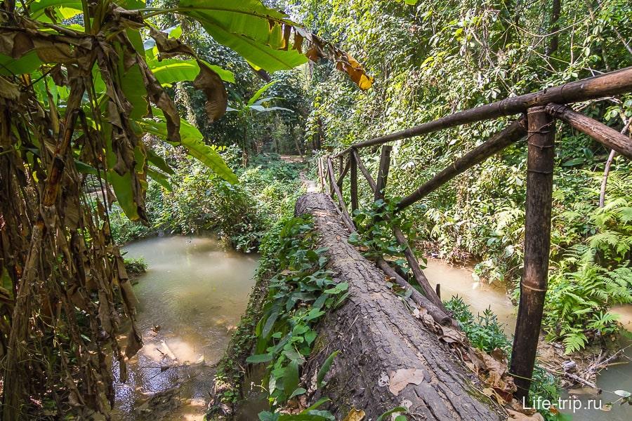 Мостик куда-то в джунгли