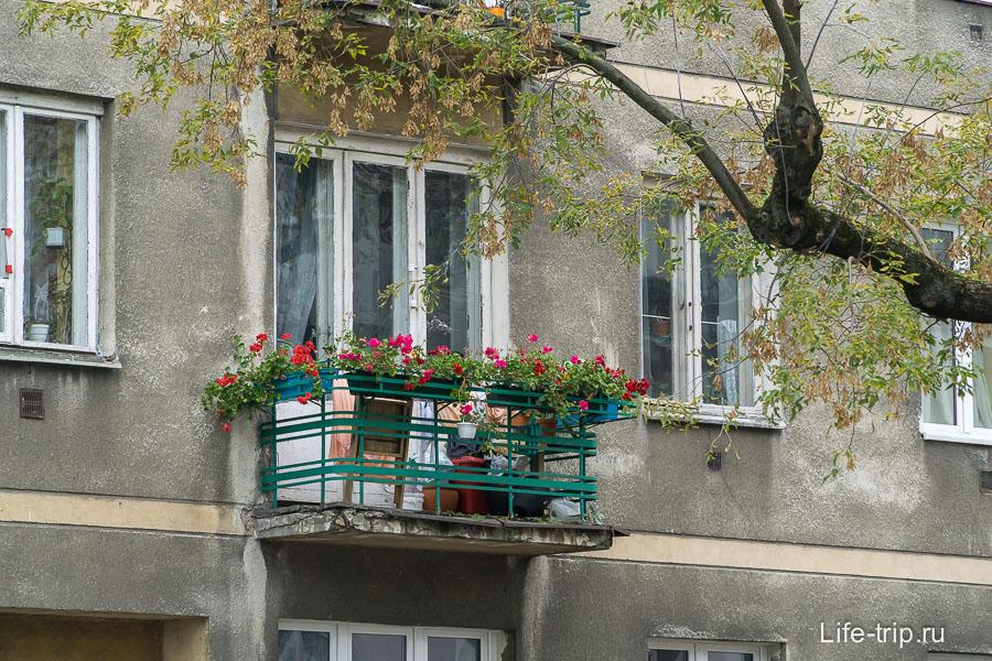 Зато повсеместно цветочки на балконах и подоконниках