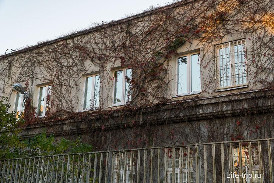 Дом, заплетенный вьюном, смотрится совсем иначе
