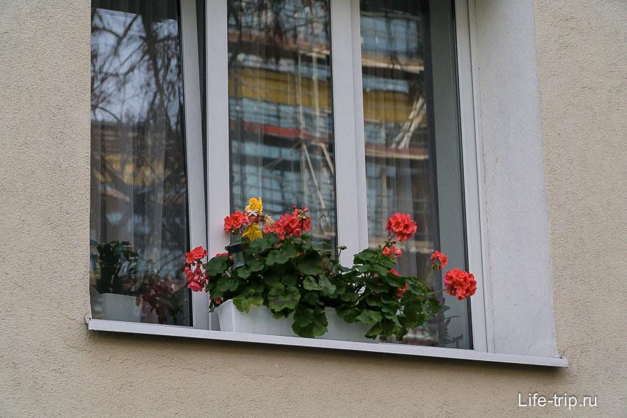 Цветочки на подоконниках повсеместное явление
