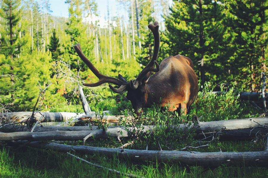 В национальном парке Йеллоустоун, США