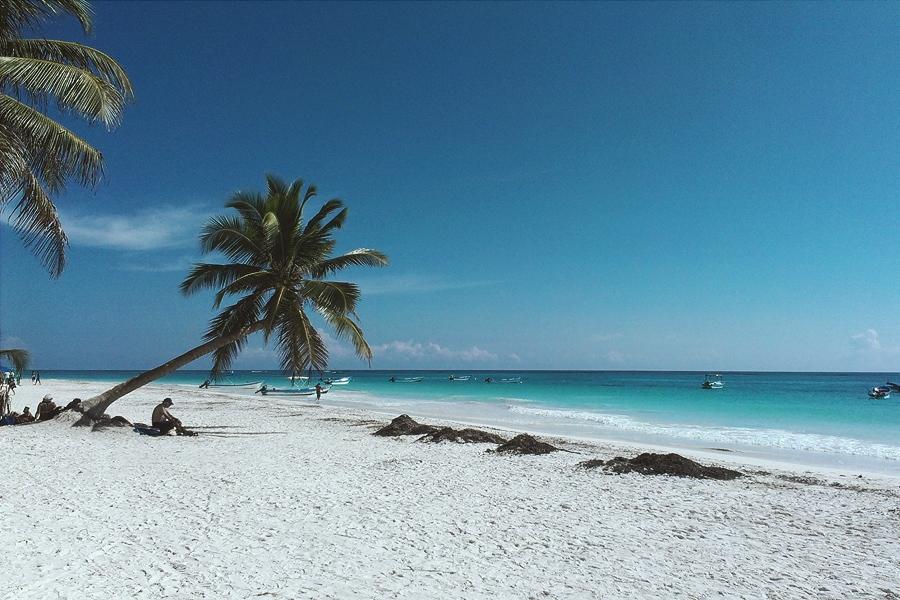 Пальмы у моря,куда ж без них фрилансеру =)