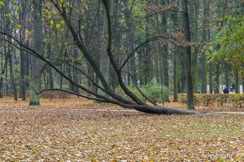 Отдыхающее дерево