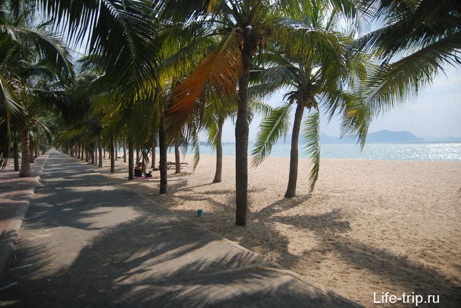 Пальмовая аллея в центральной части пляжа