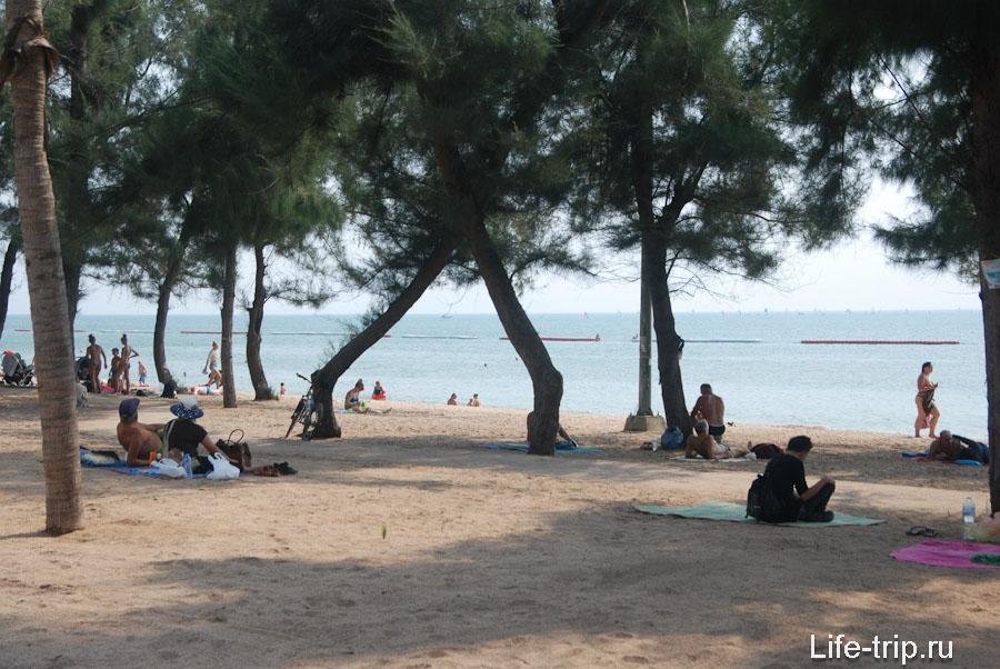 Участок пляжа с казуаринами и без рядов лежаков