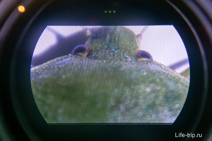 То, что видно в микроскоп