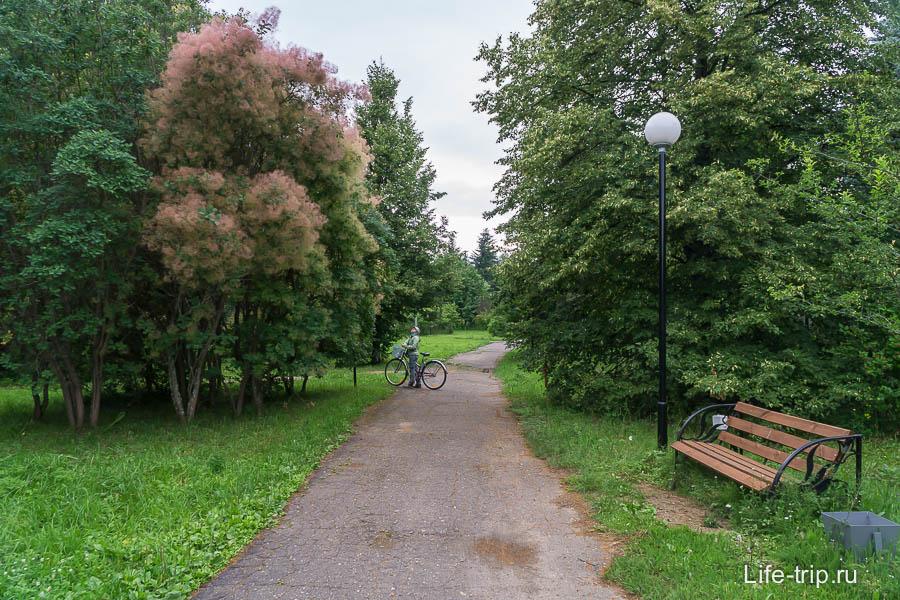 Дорожки в парке и пушистая скумпия