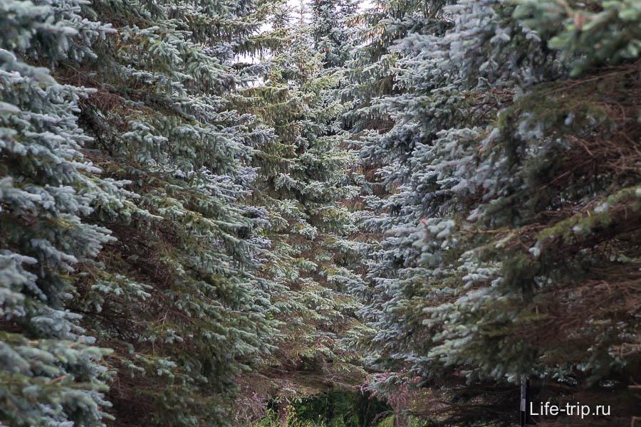 Жить бы в окружении такого леса