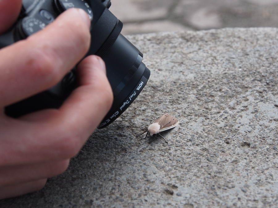 Поездка с энтомологами – фотоаппарат постоянно в режиме макросъёмки