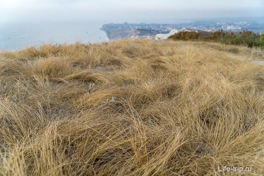 Трава очень напоминает шерсть у собаки