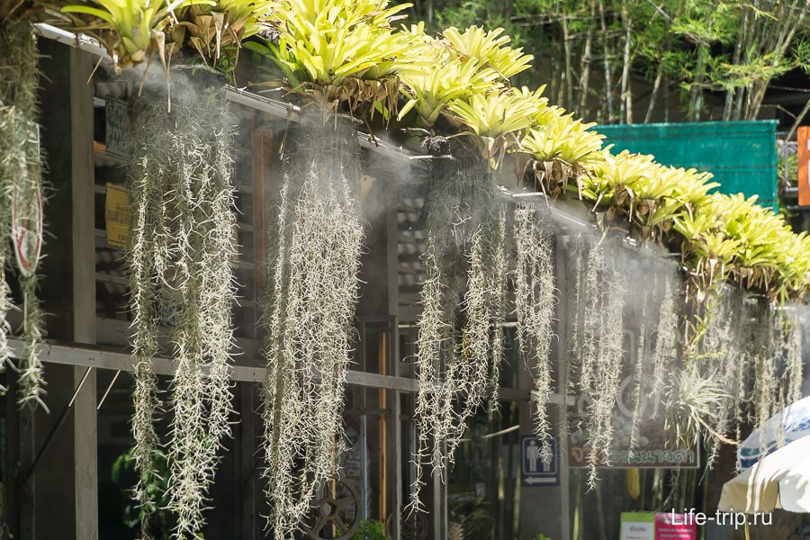 Цветы с орошением около кафе