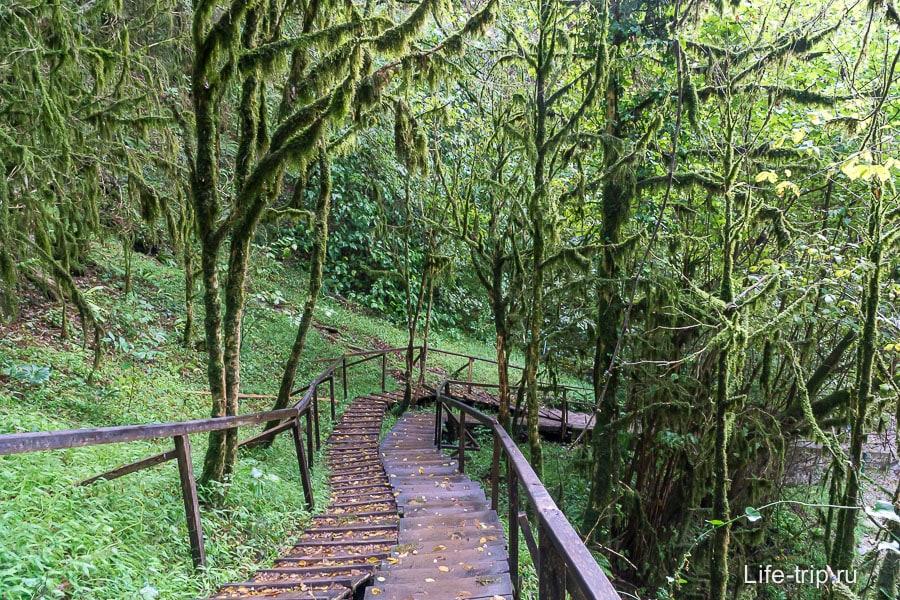Сказочный лес около 33-х водопадов