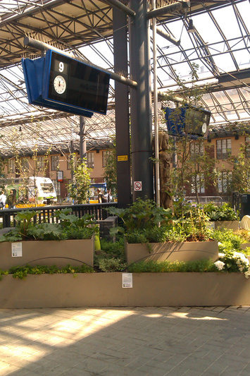На перроне в Хельсинки цветут сады