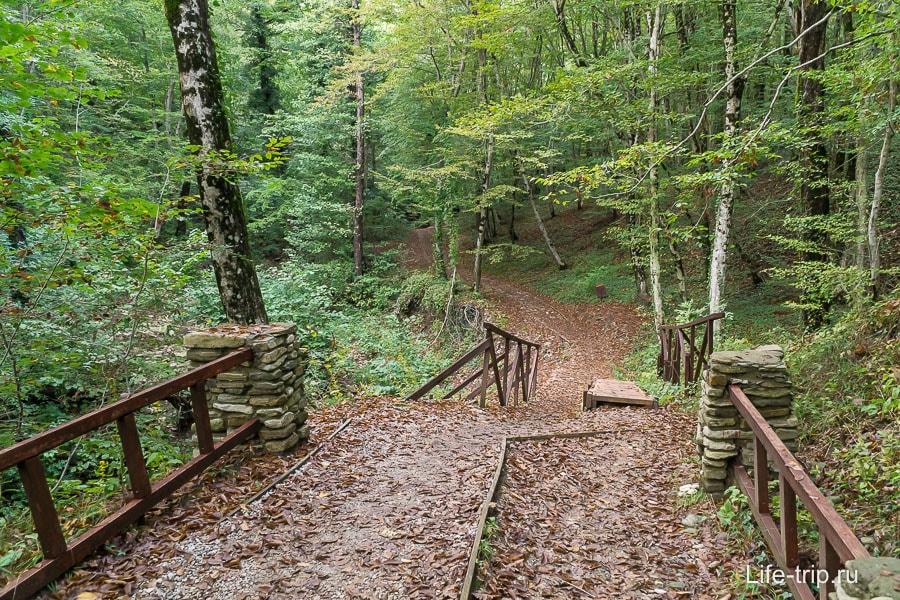 Идем дальше по лесу