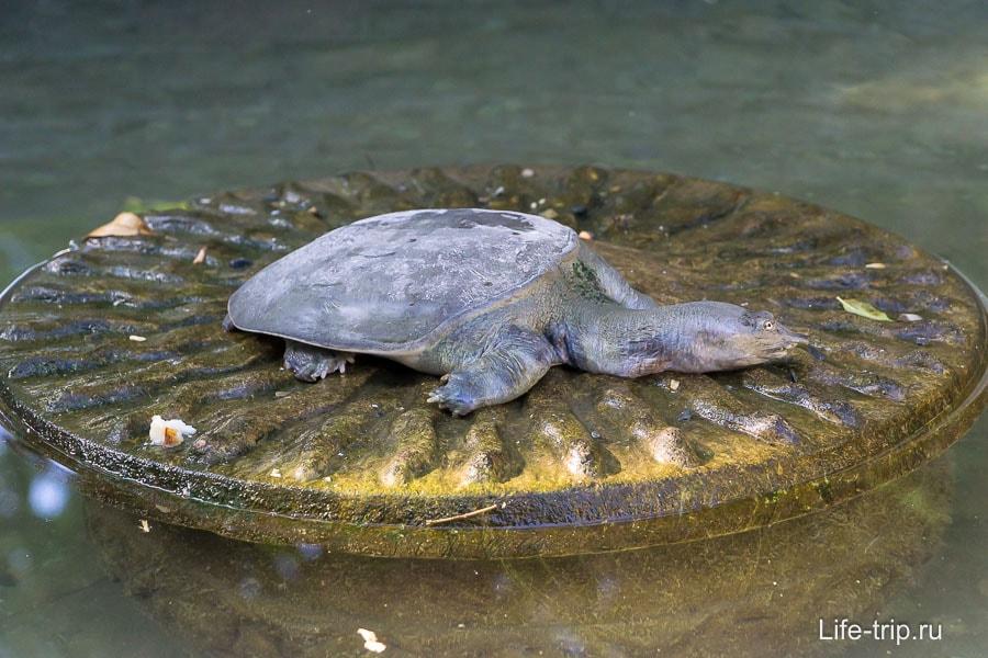 Пруд с черепахой и рыбами