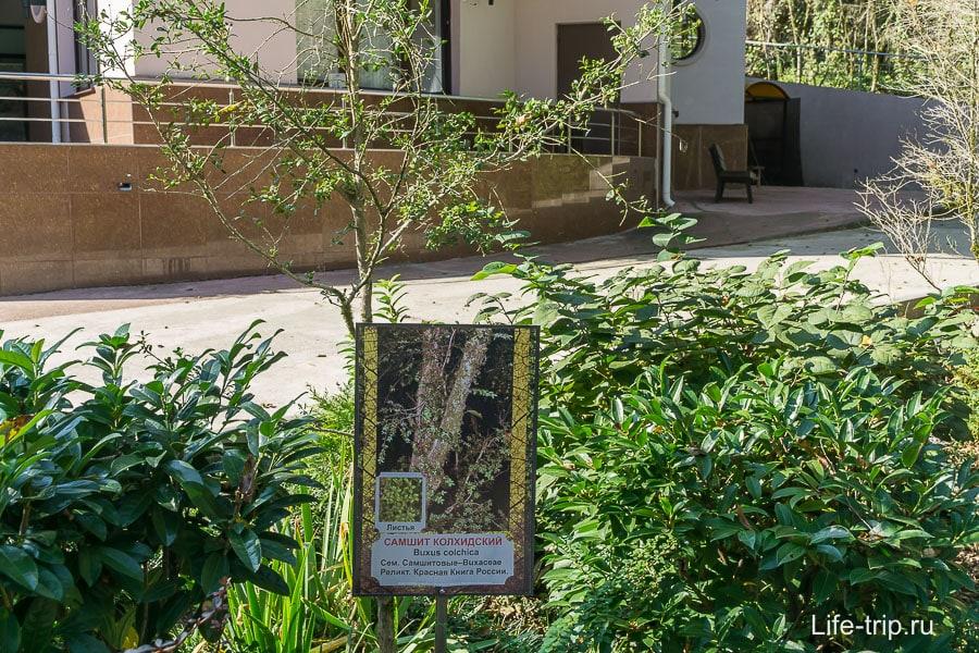 Около входа растет самшит, обозначен табличкой