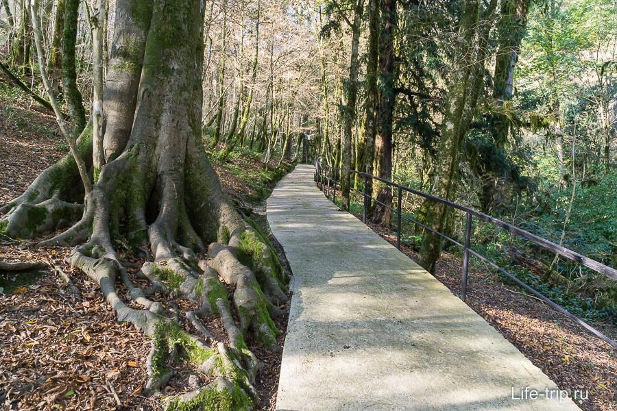 Экологическая тропа по Тисо-самшитовой роще