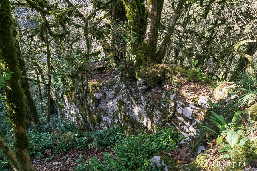 Стена уже заросла деревьями