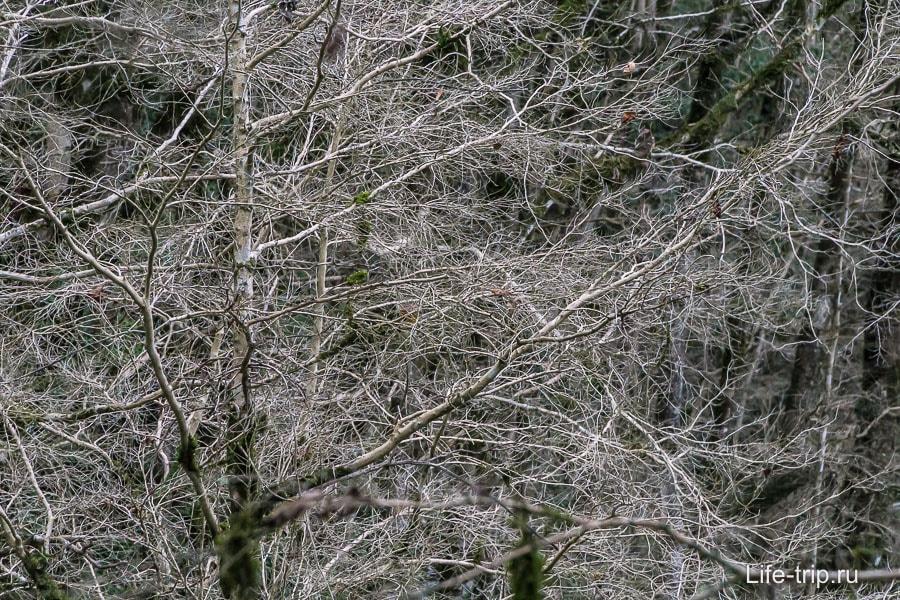 Мертвый самшит, застыл в вечной зиме