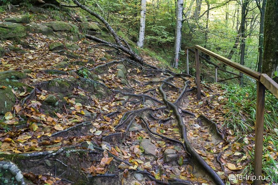Тропинка вдоль ущелья, сплошные корни