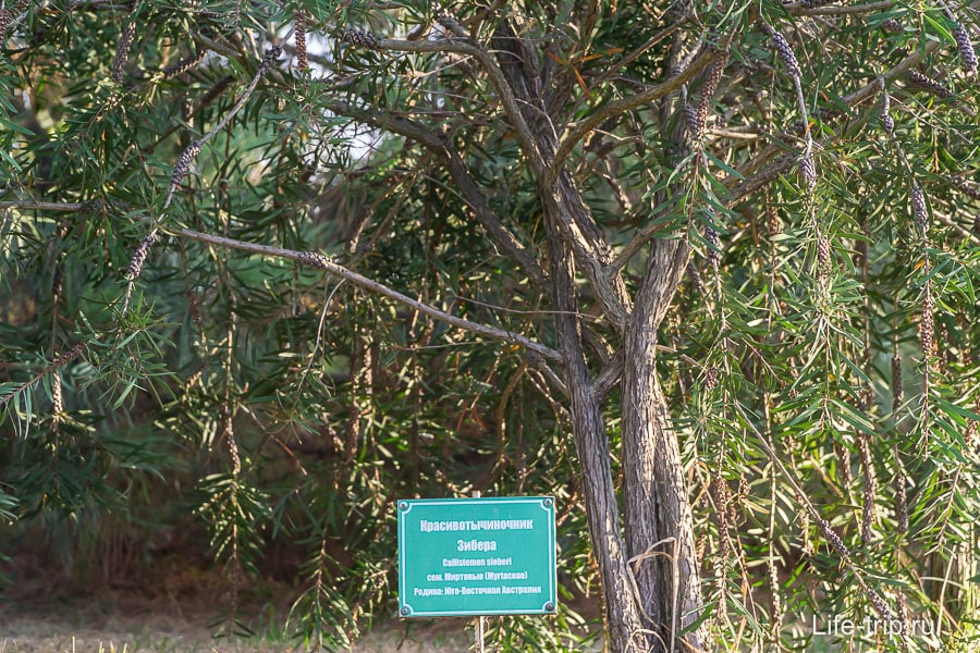 Некоторые растения подписаны