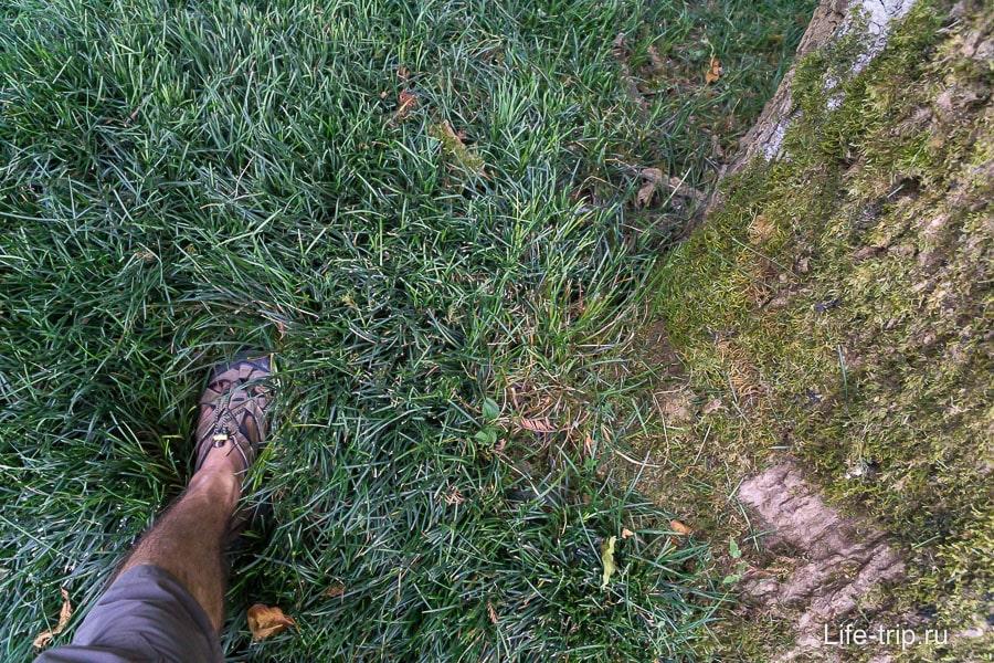 Потрясающе мягкая трава, в ней утопаешь