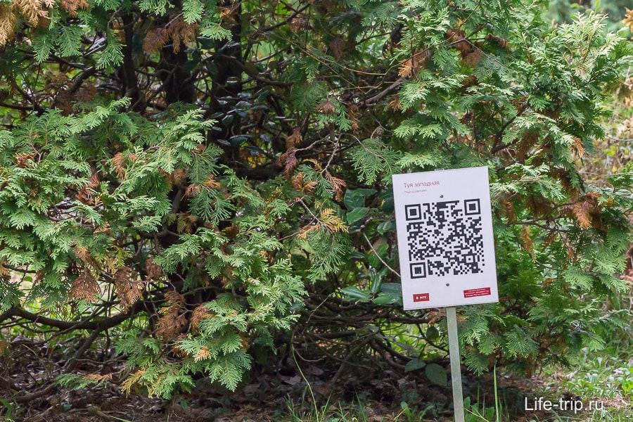 Некоторые растения не только подписаны, но и имеют QR код
