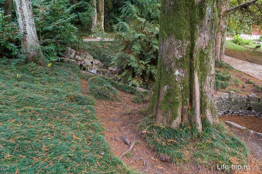 Иголки метасеквои отлично гармонируют с ярко-зеленой травой