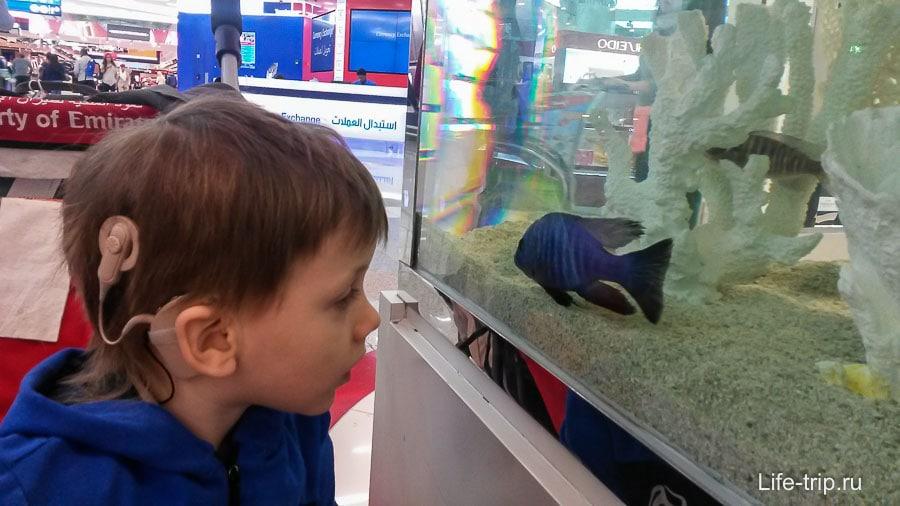 Залипаем на рыбок в аквариуме