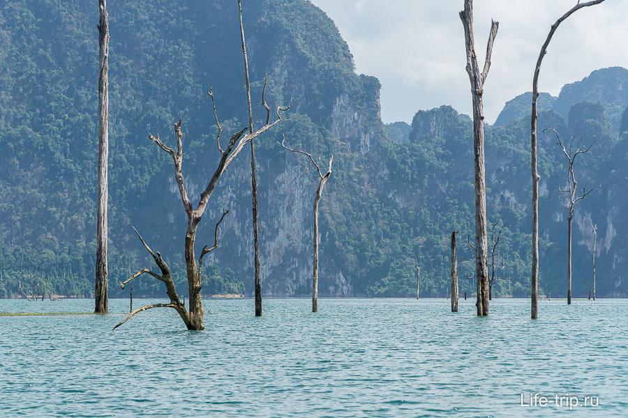 Верхушки деревьев сохранились, хотя затопили в 1982 году