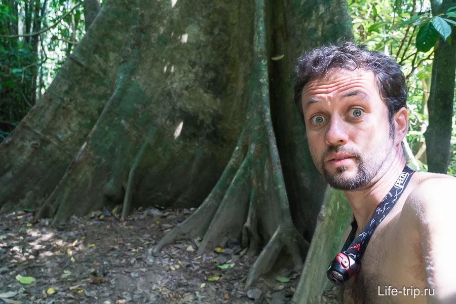 Какие корни у дерева!