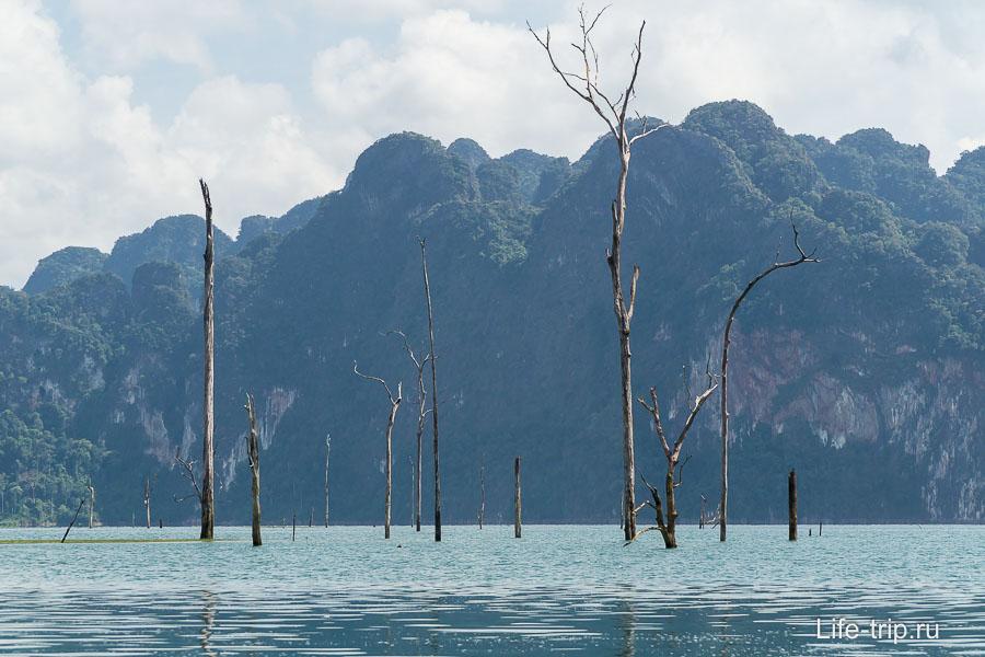 Для меня удивительно, как за 30 лет сохранились деревья