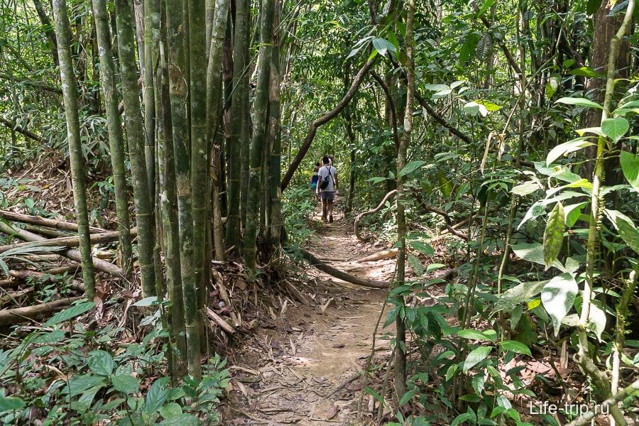 Тропинка в джунглях, вокруг бамбук