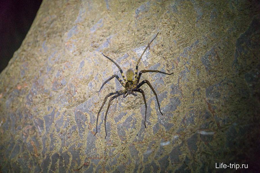 На стене можно встретить паука